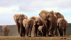 Elephants: AFP photo