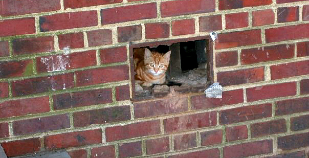 A feral kitten looks out from beneath an apartment block.