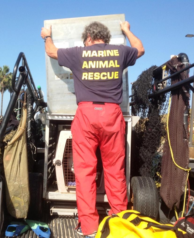 Marine Animal Rescue